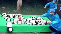 饲养员把大熊猫当白菜晒,其中一只熊猫亮了,这是没墨了吧