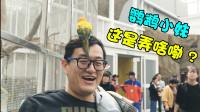 ★老肉Vlog★这只鹦鹉真的是太嚣张了!求你千万别拉粑粑啊!