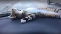 猫咪坐在跑车上,当踩油门加速时,猫咪的反应承包我一年的笑点