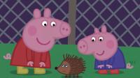 小猪佩奇简笔画:小猪佩奇发现一只可爱的小刺猬