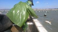 海蛎区最值钱海货被困渔网,抓到一条就发财了,馒头激动得大叫