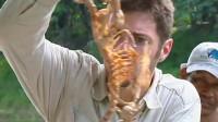 把一只鸡放进水中,水面毫无波澜,分分钟鸡却只剩下骨架!