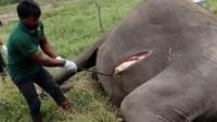 大象死后为什么一定不能碰?国外男子不信邪,结果导致意外发生