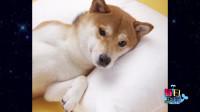 【每日一囧合辑】日本网友睡前发生的一件惨事…哈哈哈