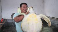 朋友请老四去观赏代养的海龟,老四高兴坏了,说这海龟能活一万年