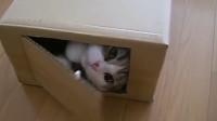 猫咪是如何逐渐失去耐心的?