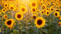 【科学嬉游记】生命——植物如何获得食物?