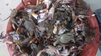 大叔赶海起蟹笼,今天螃蟹大丰收,盆都塞爆了,老板直接上门抢购!