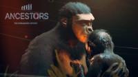 图根猿人!吃贝壳、吃龙虾追着剑齿虎到处跑!丨先祖:人类奥德赛