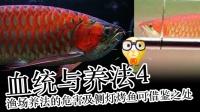 周鱼说鱼 血统与养法4 渔场主流养法的危害及侧灯烤鱼可借鉴之处 第十期