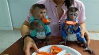 看见一盘水果的两只小猴子,一脸着急:快给我尝尝