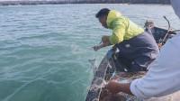 玉平跟老船长出海真爽,海货接连撞网,渔网提起的瞬间俩人沸腾了