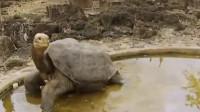 世界上寿命最长的乌龟,从乾隆时期活到了现代,送走了四任主人