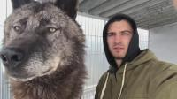 男子跟世界上最大的狼合照,狼的表情不帅,反而还有点傻