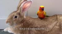 男子捡到一只小兔子,不料画风突变,让人哭笑不得