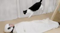 铲屎官游戏惩罚,猫从高空蹦到主人胸口,主人:野猫disco?