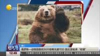 """俄罗斯一动物园倒闭30只棕熊无家可归 园主发帖求""""收留""""  说天下 20191117 高清版"""