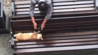 猫咪:我睡个觉我容易嘛我,你还吵我