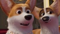 女王的柯基:这会面有些尴尬啊,就连皇家狗狗,都要联姻了
