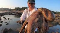 大叔到乱石堆赶海,抓到了一只巨型八爪鱼和一条凶猛海鳗,赚翻了