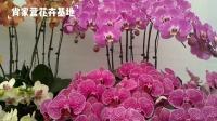 360多种花卉,4.4万亩种植销售基地,华北地区最大花卉基地,肖家营花卉基地。