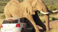 """""""恶霸""""拦路!一头大象走累了,一屁股坐塌一辆车,车主欲哭无泪"""
