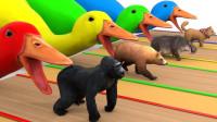 亲子早教动画大猩猩从鹅嘴喷泉出来变成家禽动物