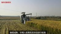 晚稻成熟,半喂入收割机在农田收割水稻,收成不错