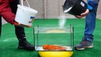 将1000颗曼妥思和可乐倒在龙虾上会发生什么?老外亲测,画面太凶猛