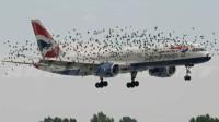飞机那么庞大的面积,遇上小鸟怎么那么危险?看完倒吸口凉气