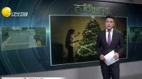 气候变化导致圣诞树价格创新高  比十年前翻倍