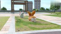 短腿小柯基:做一只理智的狗很重要,不能让自己吃亏