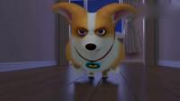 短腿小柯基:养狗需谨慎,别和我一样养到坑狗