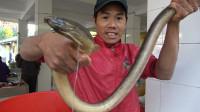 小池运气爆发,抓到3.1斤金黄大海鳝,打破十年记录,卖了1200块