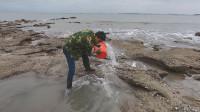 退潮后海边水坑浑浊无比,拿来水桶直接舀干,里面的海货又大又肥