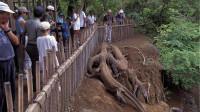 印度村子出现奇怪生物,村民好奇围观,专家一看赶紧让人撤离!