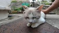 野外遇见一只小流浪猫,走近一看还不怕人
