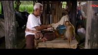 双猴记:旅行团导游小伙说得你好,听着这有意思