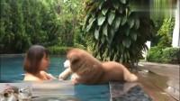 主人叫小阿拉斯加下来游泳,狗狗怎么也不下来