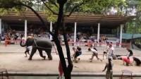 搞笑视频:跟大象拔河比赛 结果被大象给套路了
