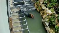 男子在水中纹丝不动,要不是监控,肯定不知道发生了什么