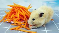 仓鼠到底有多爱吃胡萝卜丝? 看这只小仓鼠的速度,吃得多香