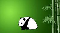 画大熊猫窦老师教画画