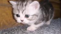 这样的小猫咪,凶起来都这么可爱呢!