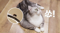卧室里飞来大黄蜂,胆小主人向猫咪求助,不料12只猫都怂成狗