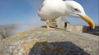 小伙手机被海鸥叼走,开着的摄像头,无意间拍下珍贵的画面