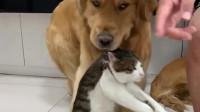 当狗子与猫咪在一起的时候,求猫咪的心里阴影面积!