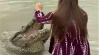 美女给鳄鱼喂食,意想不到的一幕发生,镜头拍下了全过程!