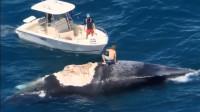 男子跳上鲸鱼尸体,拍完照后,意想不到的画面被镜头记录!