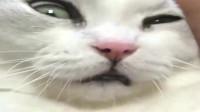 受委屈的猫咪求主人安慰,网友:真是太可爱了